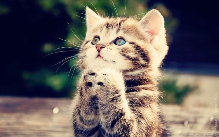 Gambar Kucing Lucu Dan Imut Ragam Informasi